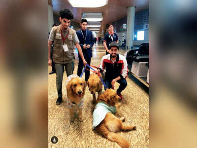 Ruff time: Mumbai airport's 3 therapy dogs 'abducted'