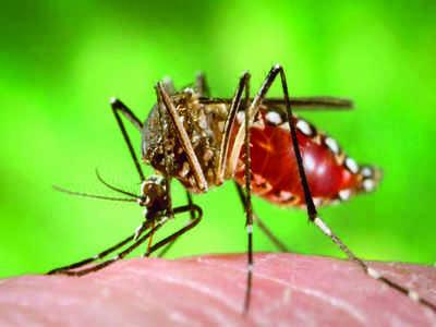 Even mosquitoes prefer techies in Namma Bengaluru