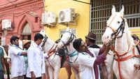 Chennai: Health check-up camp held for horses used for joy riding