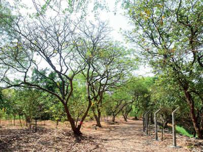 Mumbai: 3 months on, Mahim nature park's fate hangs fire