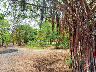 Save Mahim Nature Park: State hell bent on using park for Dharavi's redevelopment