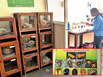 Pest vs pest — a new war cry at agriculture college