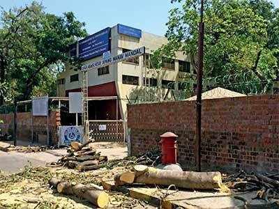 Ahmedabad: Two trees chopped off at Apang Manav Mandal