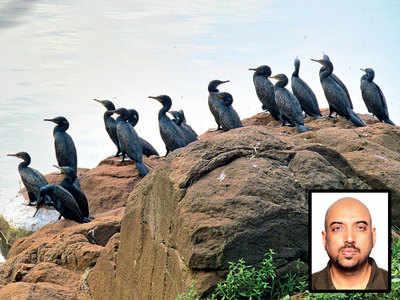A clique of cormorants