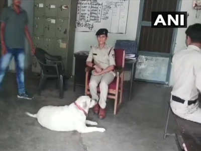 Photos: Deserted after owners were jailed, dog finds home at police station