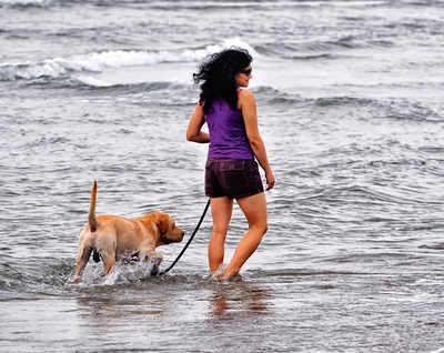 Pet Puja: Take a walk like a boss