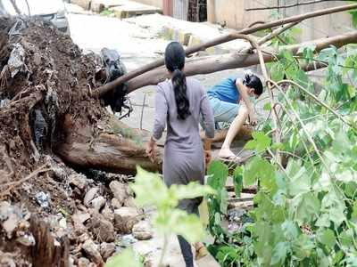 Rain, winds have left Bengaluru's trees in free fall