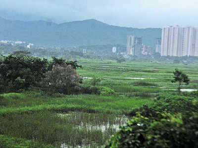 Bombay High Court lifts stay on felling of 1,878 trees for four public projects, including Metro 4 line