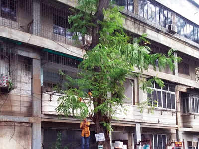 Malad tragedy: Residents say BMC did not act on tree complaint