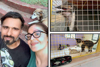 Pooja Bhatt helps friend and animal rescue worker Sameer Vohra to set up shelter in Kalote