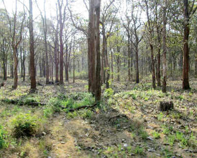 Nagarahole worth $148mn, but only if it is conserved