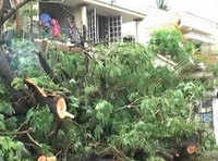 Cyclone-battered Nellore on recuperation mode