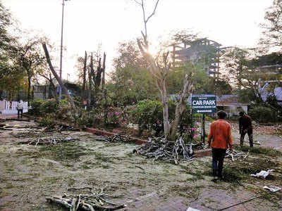 Poona Club axes several trees despite stop order