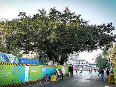 150-yr-old banyan tree spared the Metro axe; MMRCL and traffic police chalk out alternate arrangements