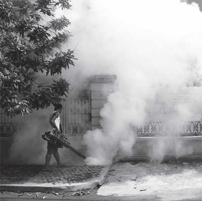 City firm in dengue windfall?