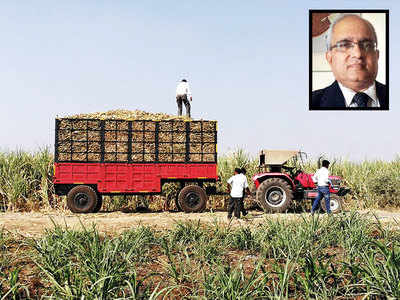 Now, a sugarcane trailer with a sense of balance