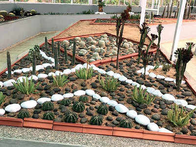 Guj to get country's largest cactus garden