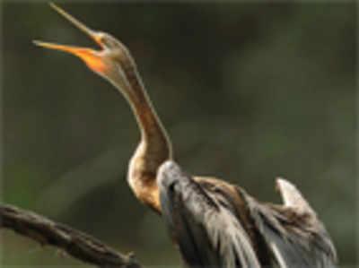 Get set to join global backyard bird count