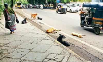Corporators seek to relocate strays in bid to woo voters