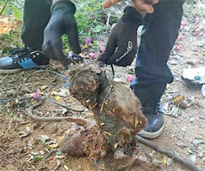 Monkey tied, tortured to death by Vellore medical students