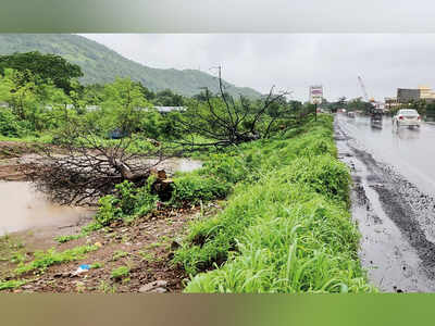 3,000 trees being hacked to widen Bhiwandi bypass