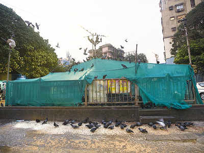 Kabootar Khana near Khar market sealed by BMC after residents complaint of asthma, TB