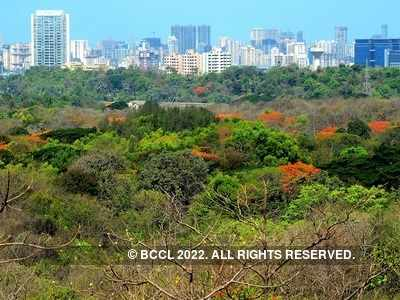 National Green Tribunal clears way for Metro III's car depot at Aarey