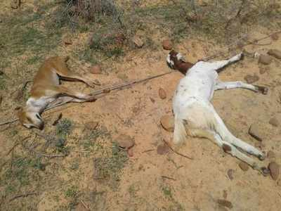 Stray dog dies after saving sheep, four shepherds from electrocution