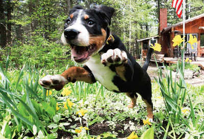 Pet Puja: When dogs get too excited