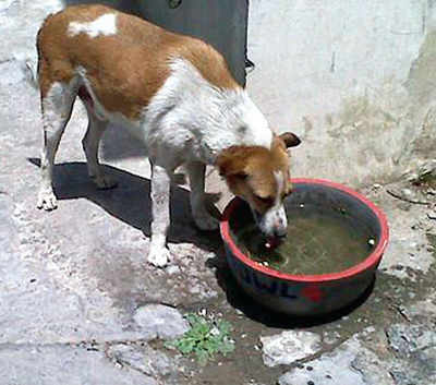 'Water Bowl Project' for strays this summer