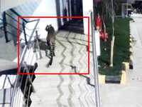 Maharashtra: Leopard enters Korrum Mall in Thane
