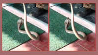 Tamil Nadu: Snake found inside an ATM in Coimbatore; later rescued