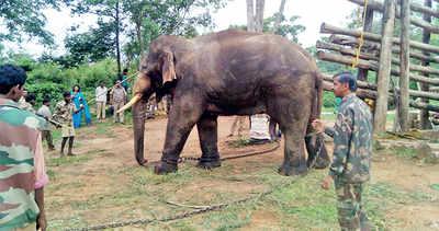 Karnataka: Maharashtra's SoS to Karnataka Tame tuskers