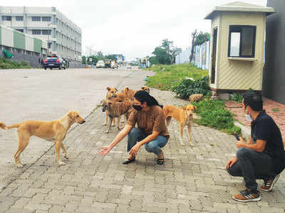 Mysterious sharp rise in Kharadi dog cruelty cases