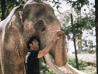 Junglee movie review: This Chuck Russell directorial, starring Vidyut Jammwal, celebrates the bond between man and elephant