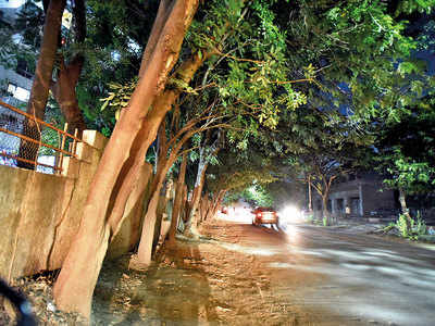 16 trees set to face the axe in Balewadi