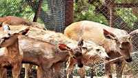 Delhi: Watermelons, sprinklers keep animals at zoo cool during heatwave