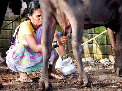 Thousands of cattle dead; city may face milk crisis