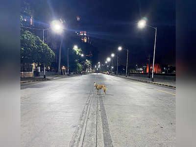 Mumbai Speaks: Dog days