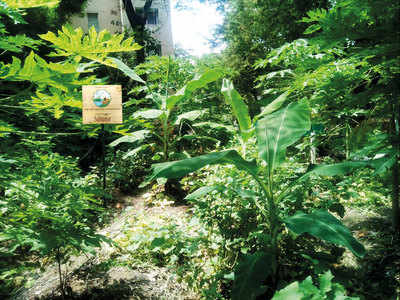 City institutes begin organic farming in barren patches on their campuses
