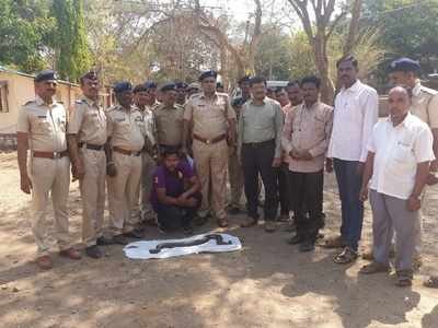 Man arrested in Kalyan with Indian sand boa snake worth Rs 1.5 crore
