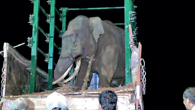 Forest dept team was in the jungle for about 4 days before elephant that has kept villages under fear was captured