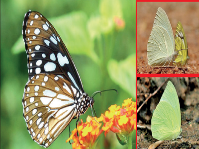 Butterfly high in Bengaluru