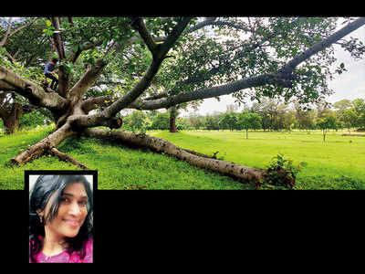 The not-so-faraway tree
