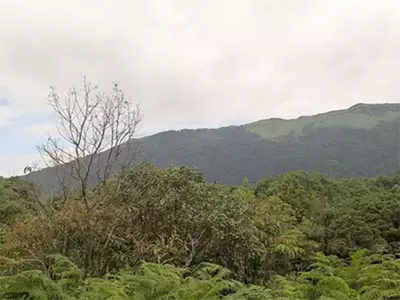 Group pushes aside forest officials, buries body in reserved forest area