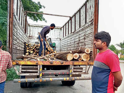 PCMC clueless on its van picking hacked trees from its pool