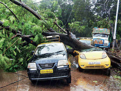 BMC approved cutting of nearly 500 trees