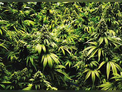 A closer look at weed
