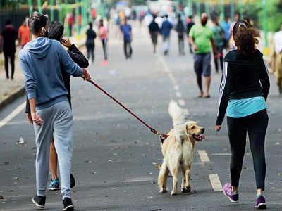 Cubbon Park flexes its muzzle power