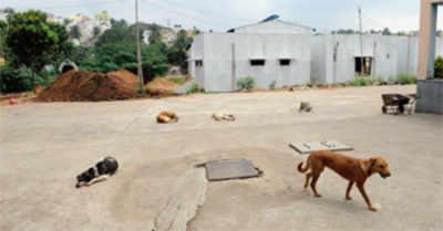 Bangalore's first pet crematorium ready